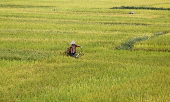 Philippines keeps door open for Vietnamese rice