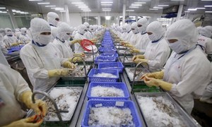 Vietnam's seafood exports could be left fishing in 2017