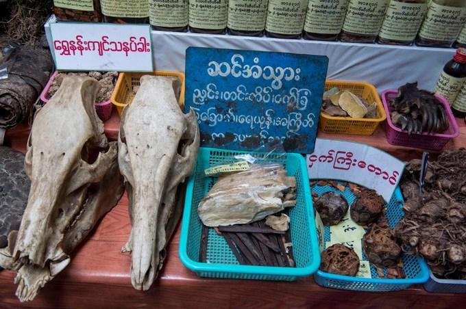 The skin cure fad threatening Myanmar's elephants