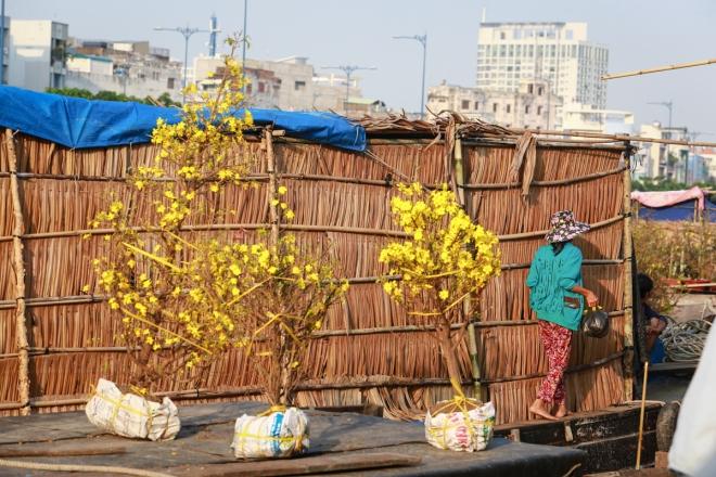 harsh-weather-casts-gloomy-cloud-over-on-saigon-flower-market-9