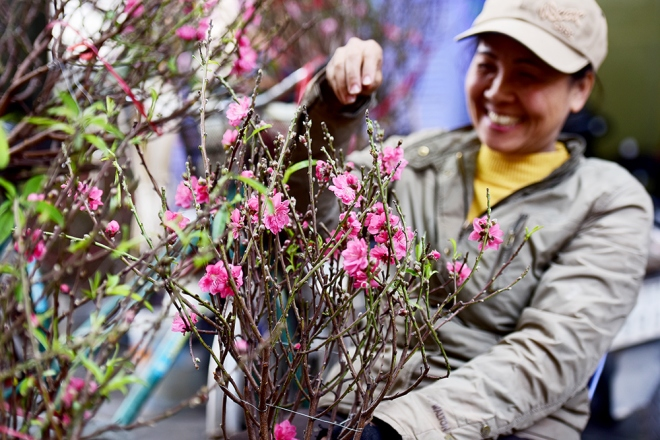 peach-blossoms-and-kumquat-trees-bring-tet-atmosphere-to-hanoi-ed-4