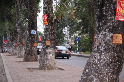 hanoi-trees-have-bark-peeled-off-as-many-desperate-for-cancer-cure-ed