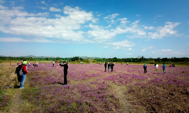 spring-in-the-central-highlands-fields-of-purple-flowers-draw-young-visitors