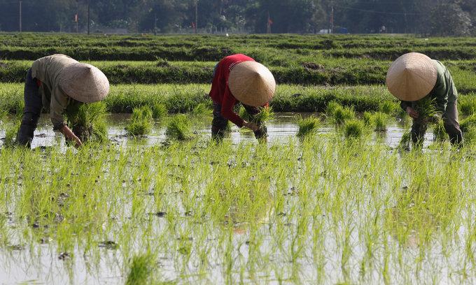 Vietnam's Jan-Feb rice export volume dips, value slides faster