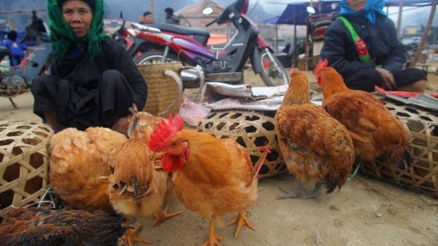 Vietnam raises bird flu alert for fear of human infections