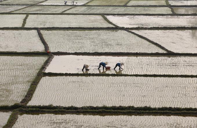 Mexico's rice import plan may open door for Vietnamese grain