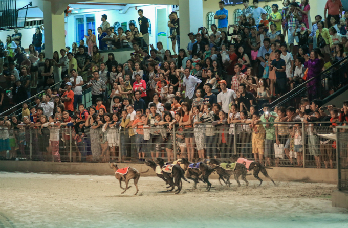 visit-vietnam-beach-town-and-bet-for-the-fastest-dog