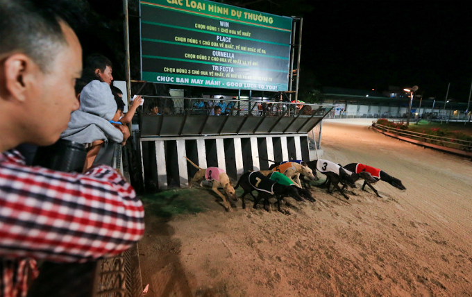 visit-vietnam-beach-town-and-bet-for-the-fastest-dog-5