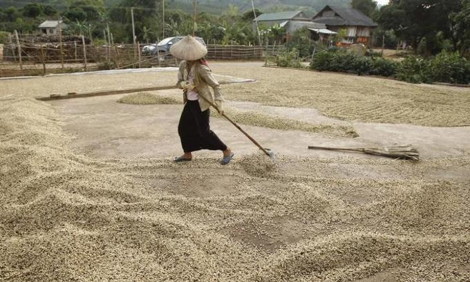 Top robusta exporter Vietnam may face coffee drain in May-June - Intimex