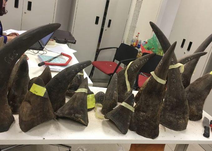 Vietnam seizes 100 kilograms of rhino horn from Kenya