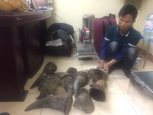 Vietnam busts major wildlife trafficking ring