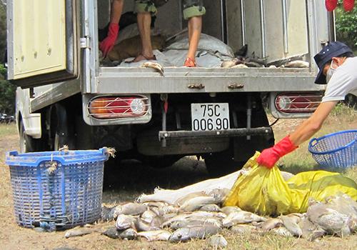 more-fish-found-dead-at-aquatic-farms