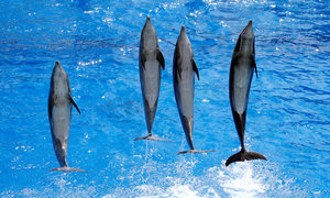 France bans breeding of dolphins in captivity