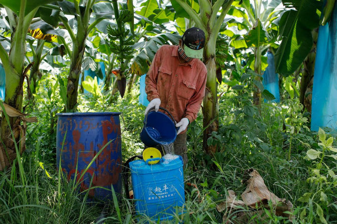 cash-and-chemicals-for-laos-chinese-banana-boom-a-blessing-and-curse-8