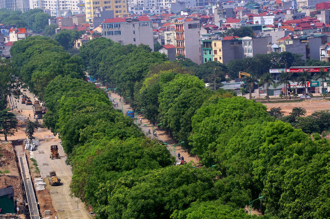 1-000-trees-to-come-down-as-hanoi-axes-green-space-for-road-expansion-1