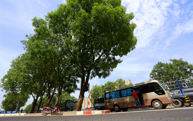 1-000-trees-to-come-down-as-hanoi-axes-green-space-for-road-expansion-3