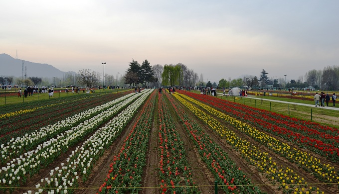 People walk in the Indira Gandhi Memorial Tulip Garden in Srinagar, Indian-administered Kashmir, March 24, 2016. Photo by Thomson Reuters Foundation/Athar Parvaiz