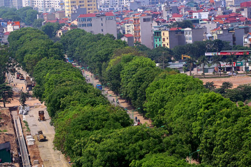 hanoi-mulls-replacing-decades-old-iconic-trees