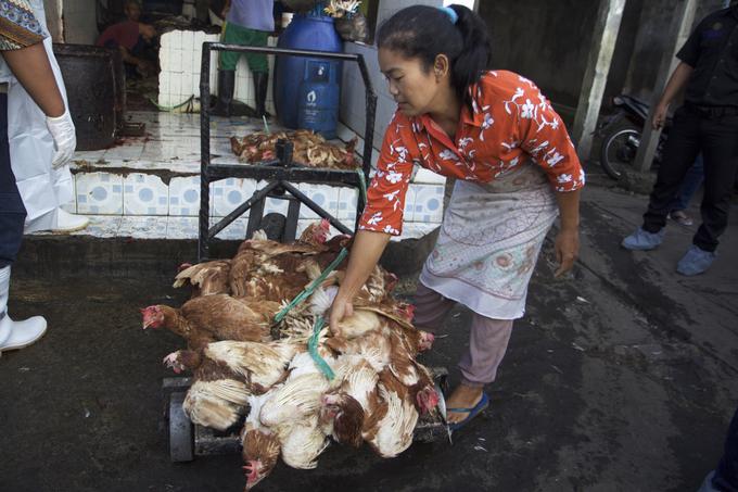 Asia continues battle as Vietnam declares free of bird flu