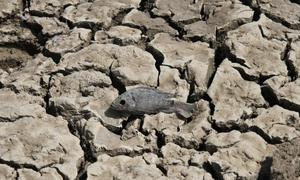 Aid groups seek to turn on funding tap to douse drought crises