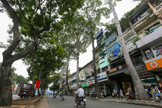 saigon-sacrifices-old-trees-to-make-way-for-first-metro-line-6