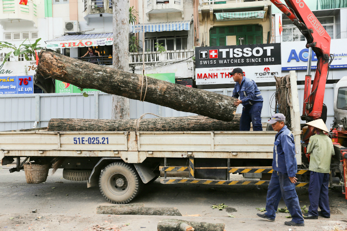 saigon-sacrifices-old-trees-to-make-way-for-first-metro-line-5