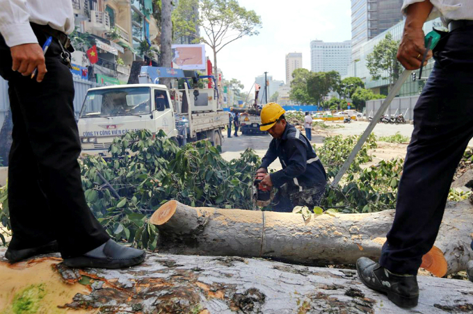 saigon-sacrifices-old-trees-to-make-way-for-first-metro-line-4