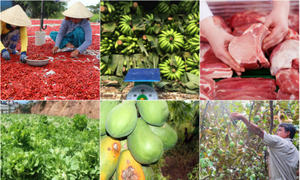 Vietnam launches new agency to 'rescue' farm products