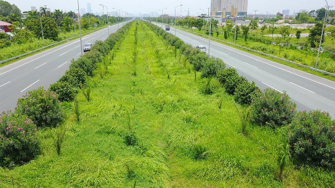 how-the-green-grassy-median-strips-in-hanoi-become-a-divisive-political-saga-1