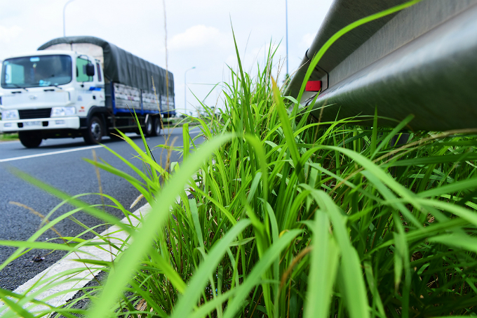 how-the-green-grassy-median-strips-in-hanoi-become-a-divisive-political-saga-3