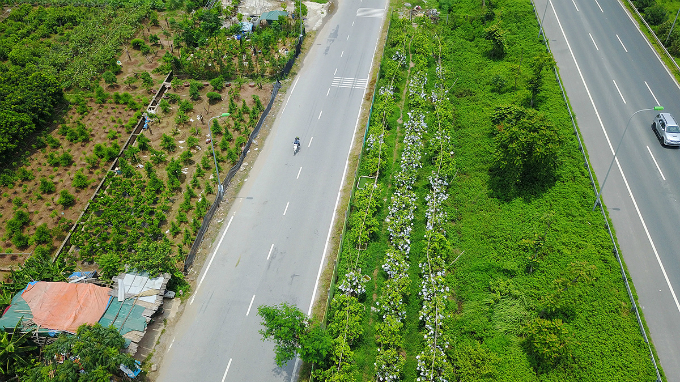 how-the-green-grassy-median-strips-in-hanoi-become-a-divisive-political-saga-6