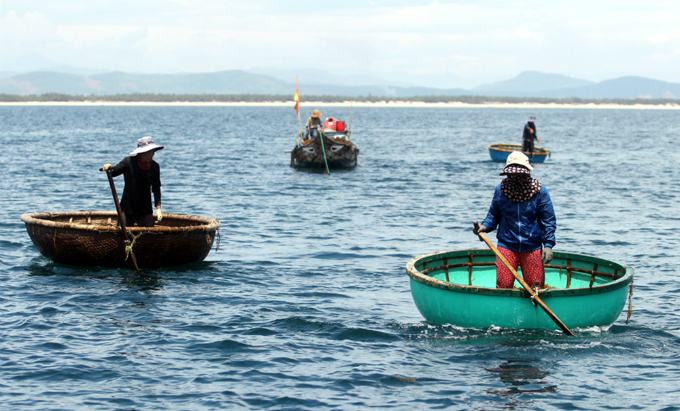 money-to-dive-for-algae-rush-sends-vietnamese-fishermen-deep-into-the-ocean