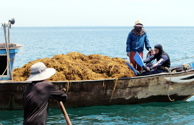 money-to-dive-for-algae-rush-sends-vietnamese-fishermen-deep-into-the-ocean-1