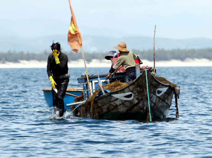 money-to-dive-for-algae-rush-sends-vietnamese-fishermen-deep-into-the-ocean-2