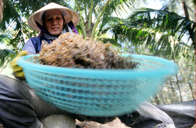 money-to-dive-for-algae-rush-sends-vietnamese-fishermen-deep-into-the-ocean-7