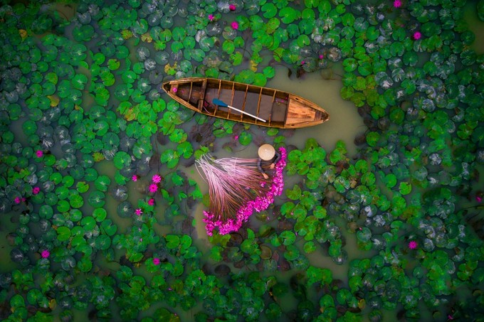 Vietnam's water lilies make Monet proud at int'l aerial photo contest