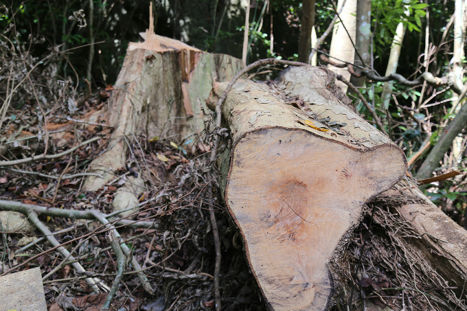 locals-uncover-illegal-logging-operation-deep-in-the-jungle-of-central-vietnam-1