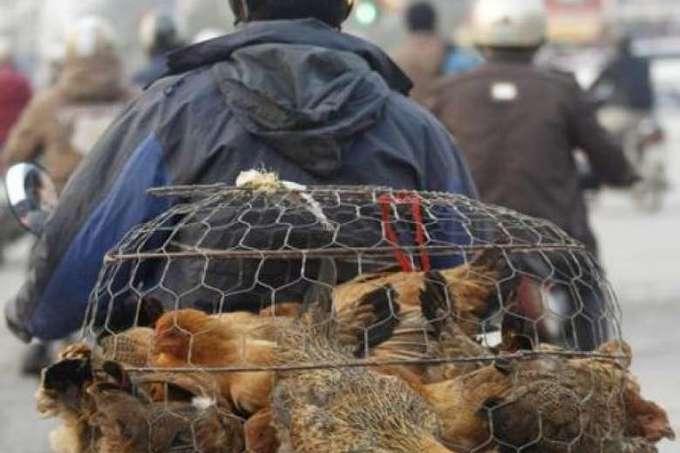 Vietnam reports outbreak of H5N1 bird flu in north