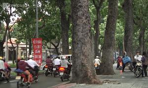 What's your take on Saigon sacrificing over 250 trees for new bridge?