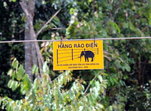 Giant electric fence shocks wild elephants away from farmland in southern Vietnam