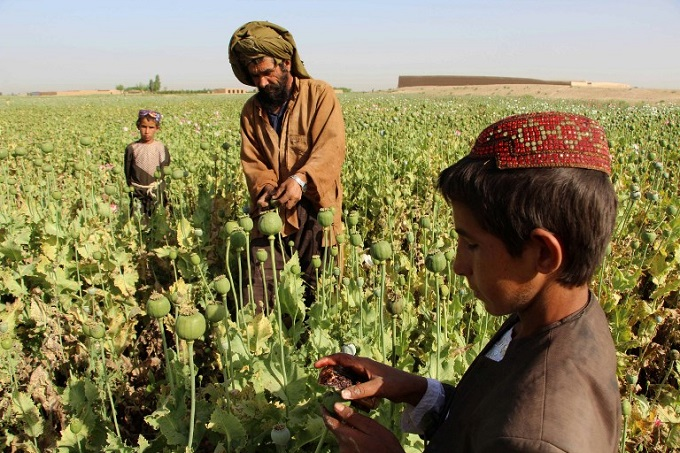 from-poppy-to-heroin-taliban-move-into-afghan-drug-production