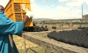 Human waste becomes fuel for Kenya's urban poor