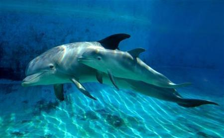 Toothless, dwarf dolphin, a case study in evolution