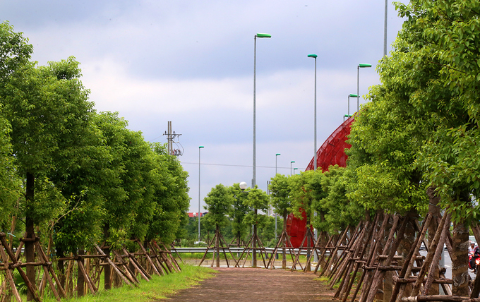 thousands-of-new-trees-line-hanoi-street-as-city-shoots-for-a-million-9