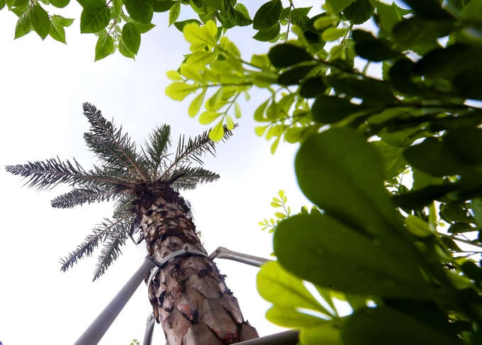 thousands-of-new-trees-line-hanoi-street-as-city-shoots-for-a-million-6