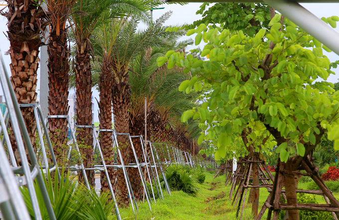 thousands-of-new-trees-line-hanoi-street-as-city-shoots-for-a-million-7