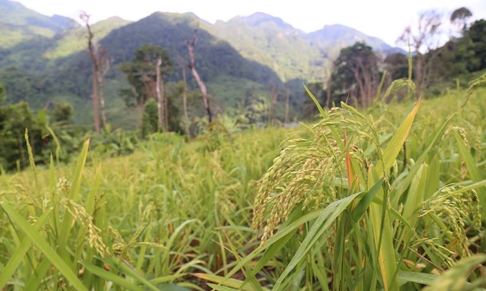 Climbing into Vietnam's mountains where rice grows in the skies