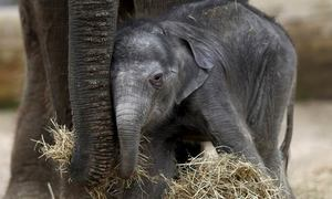 US pledges $24 million to protect Vietnam's last remaining elephants