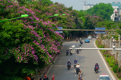 hanoi-to-remove-another-130-trees-to-make-way-for-metro-line