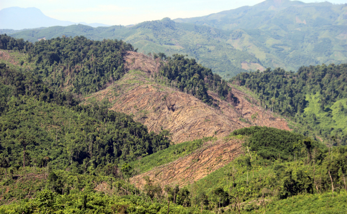 rare-forests-being-axed-under-authorities-noses-in-central-vietnam